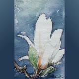 'Magnolia' 2009 - Aquarell - B H:  9 13 cm